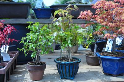 bonsai_1406_400_01